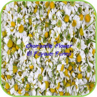 Chamomile Flowers - El Fayoum Farms